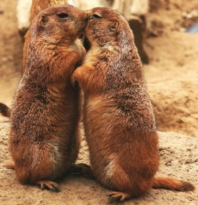 What information about predators do these prairie dogs communicate to each other?